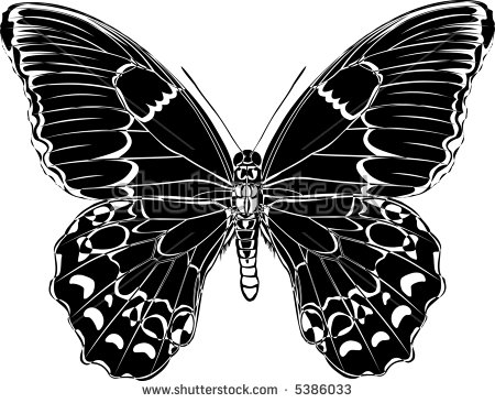 Butterfly Blackandwhite Variation Papilio Aegeus Stock Vector.