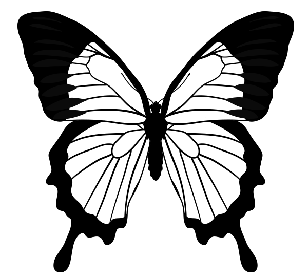 Butterfly Drawing.