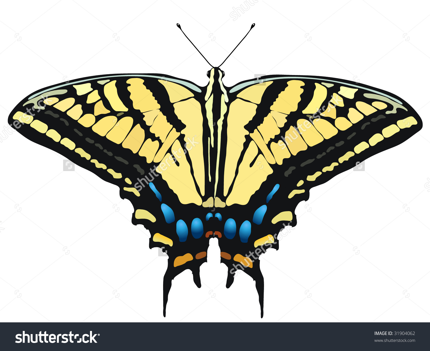 Vector Illustration Tiger Swallowtail Butterfly Stock Vector.