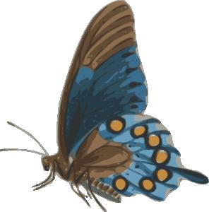 Papilio Clip Art Download.