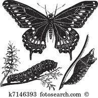Papilio Clipart Illustrations. 94 papilio clip art vector EPS.