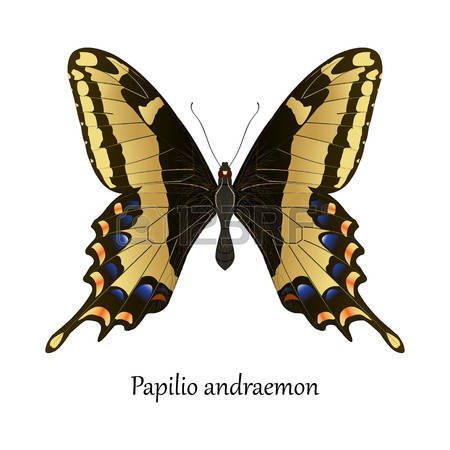 193 Papilio Stock Vector Illustration And Royalty Free Papilio Clipart.