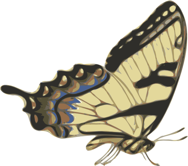 Butterfly Papilio Turnus Side View clip art Free Vector / 4Vector.