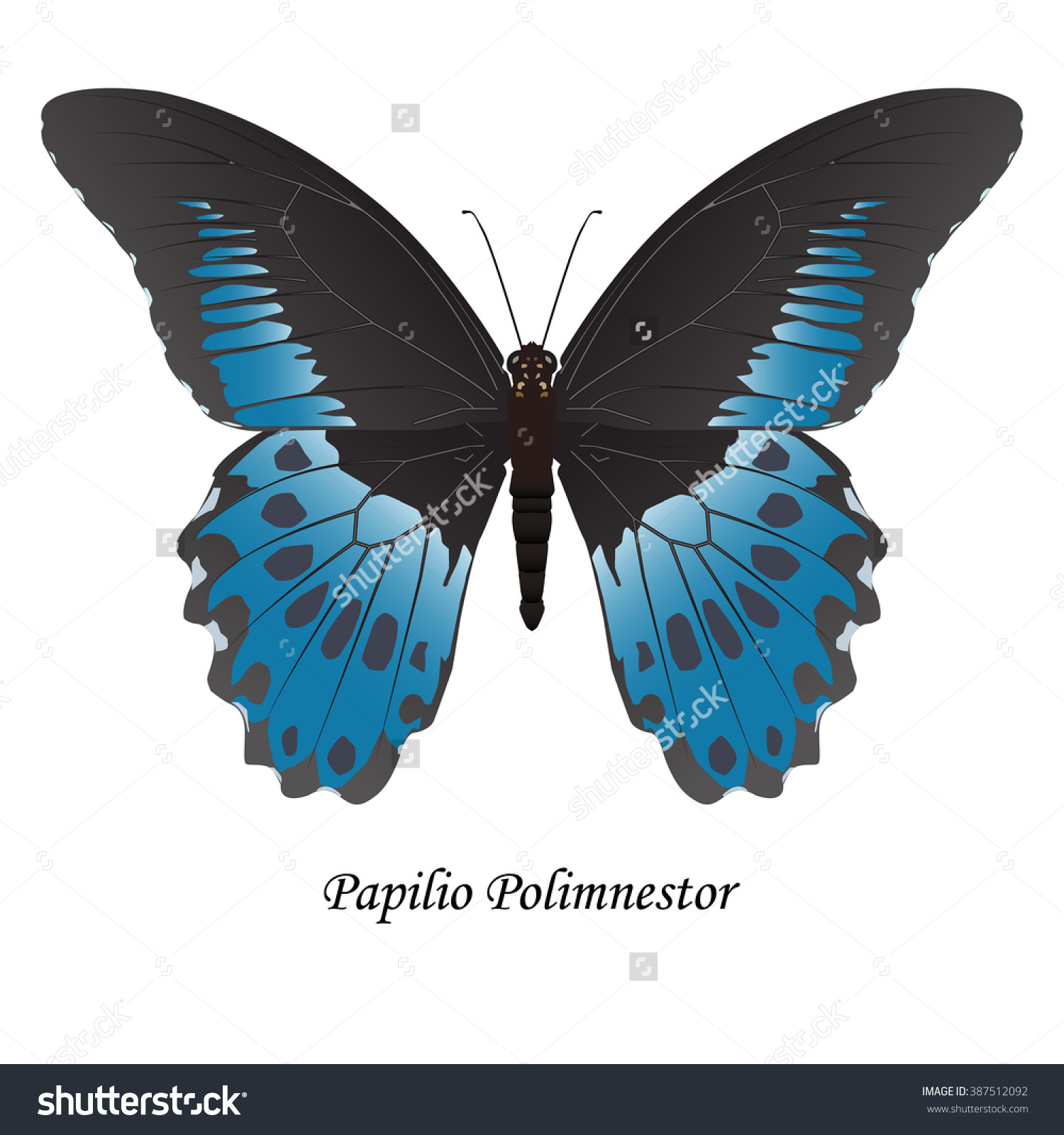 Indian Swallowtail Butterfly Papilio Polymnestor Illustration.