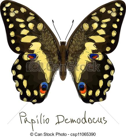 EPS Vectors of Butterfly Papilio Demodocus. Watercolor imitation.