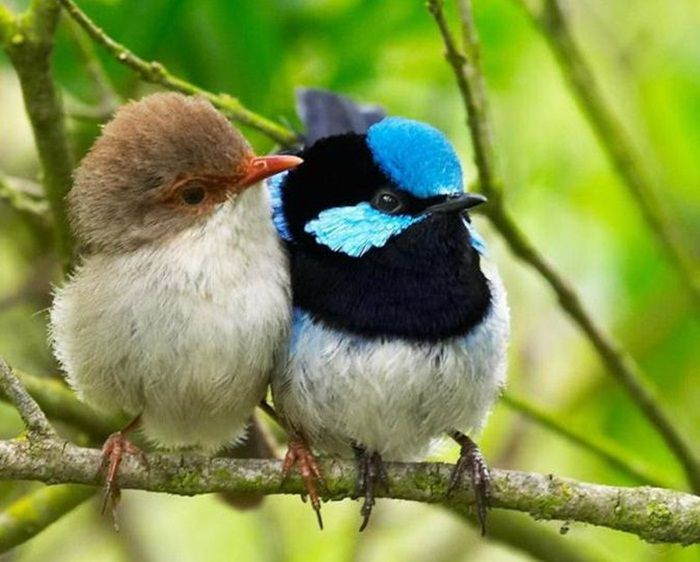 Pin by Tonya Couchman on Bird couples.