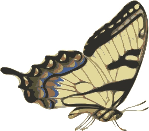 Butterfly Papilio Turnus Side View clip art Free vector in Open.