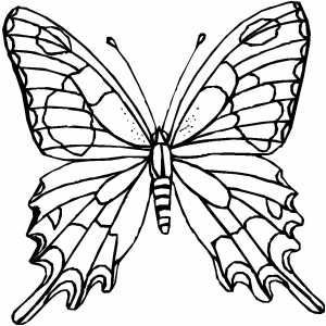 1000+ ideas about Coloriage De Papillon on Pinterest.