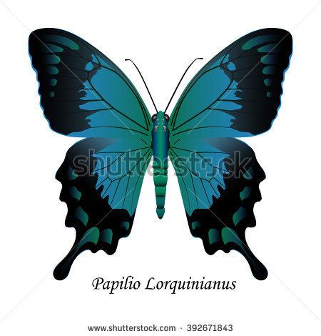 Indian Swallowtail Butterfly Papilio Polymnestor Illustration.