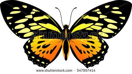 Papilio Immagini stock, immagini e grafica vettoriale royalty free.
