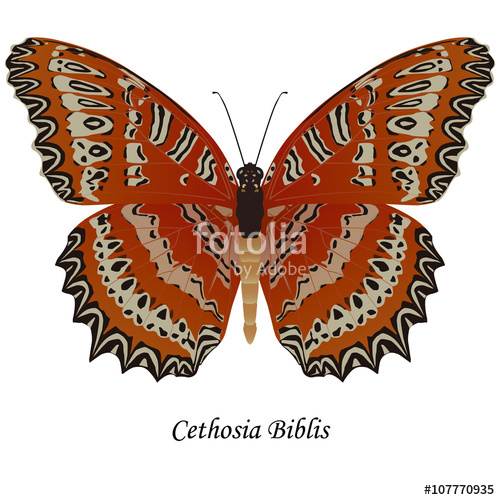 Illustration of Indian Swallowtail Butterfly.
