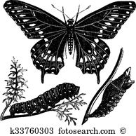 Papilionidae clipart #20