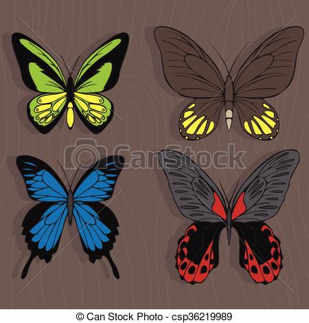 Vector of Big realistic collection of colorful butterflies.