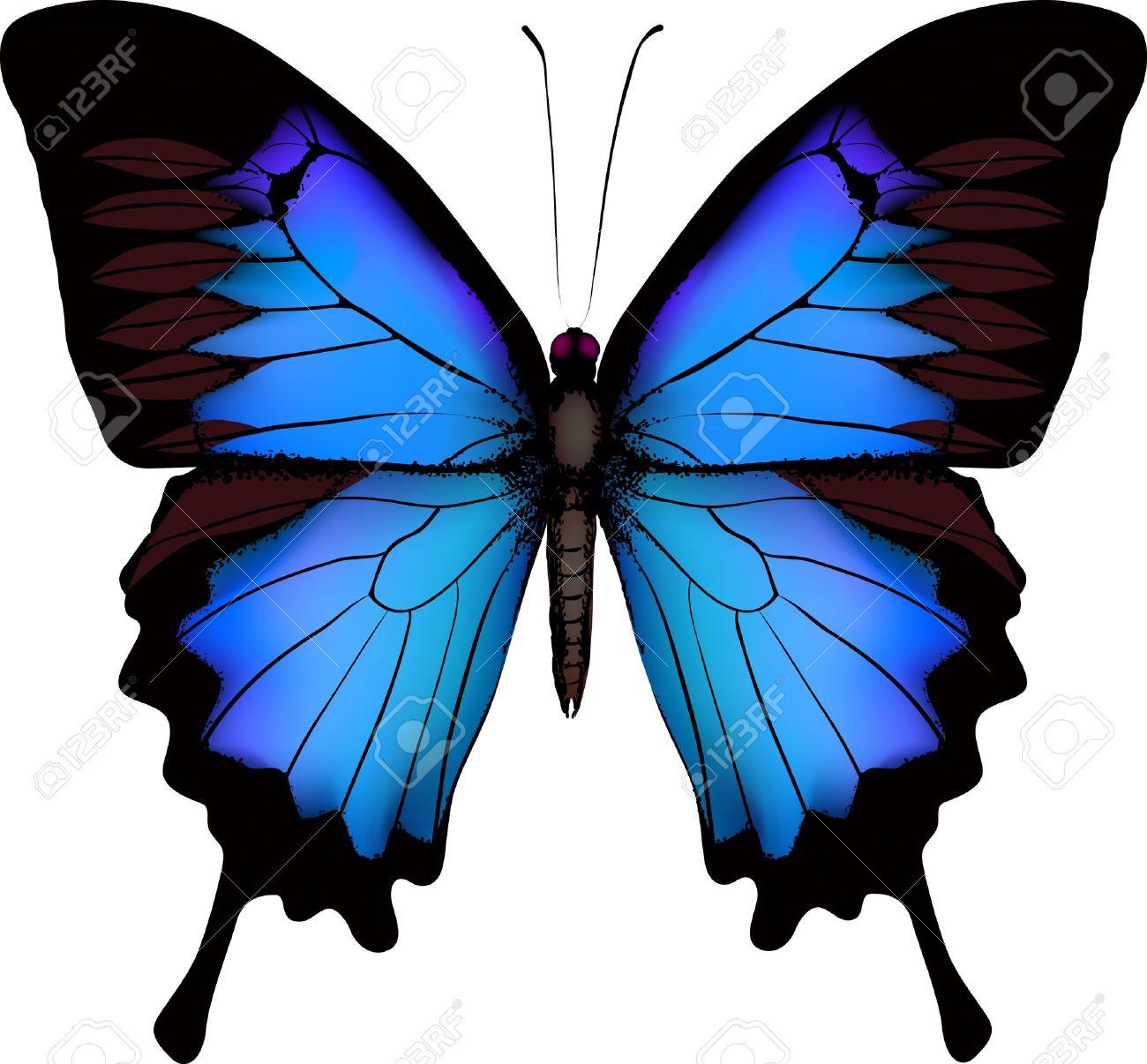 Azul Mariposa Papilio Ulysses (montaña Papilionidae) Aislado.