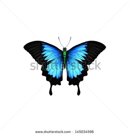 Papilio Ulysses Banco de imágenes. Fotos y vectores libres de.