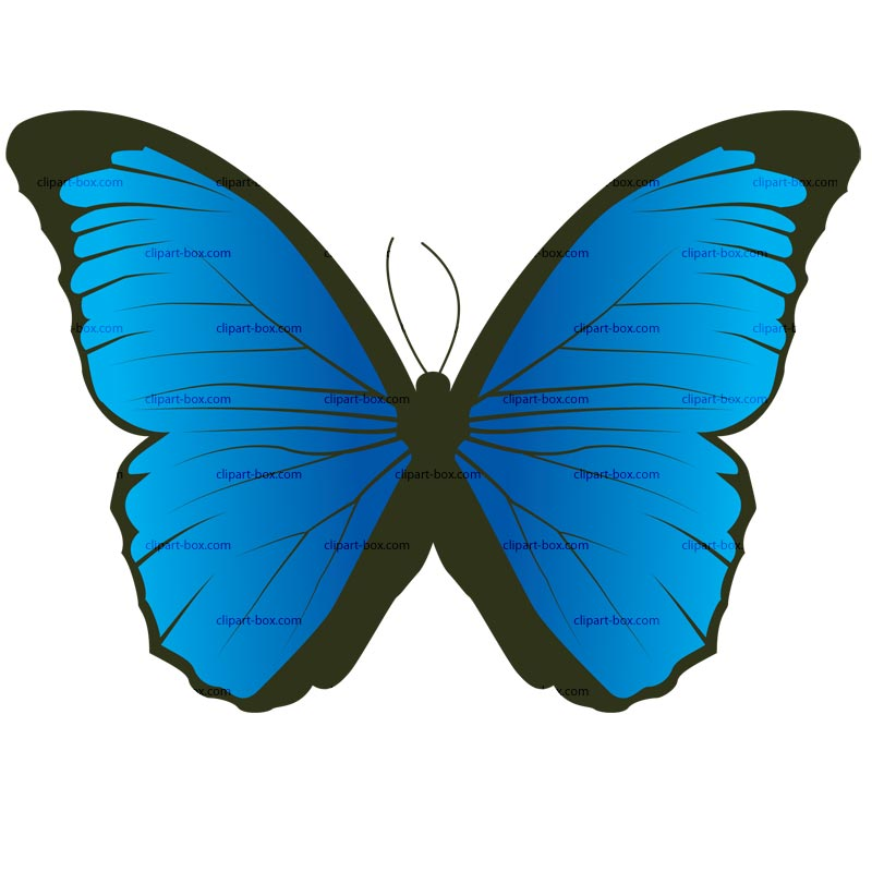 CLIPART BUTTERFLY 2.