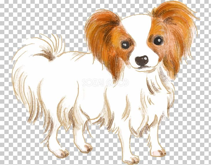 Papillon Dog Phalène Dog Breed Companion Dog Spaniel PNG.
