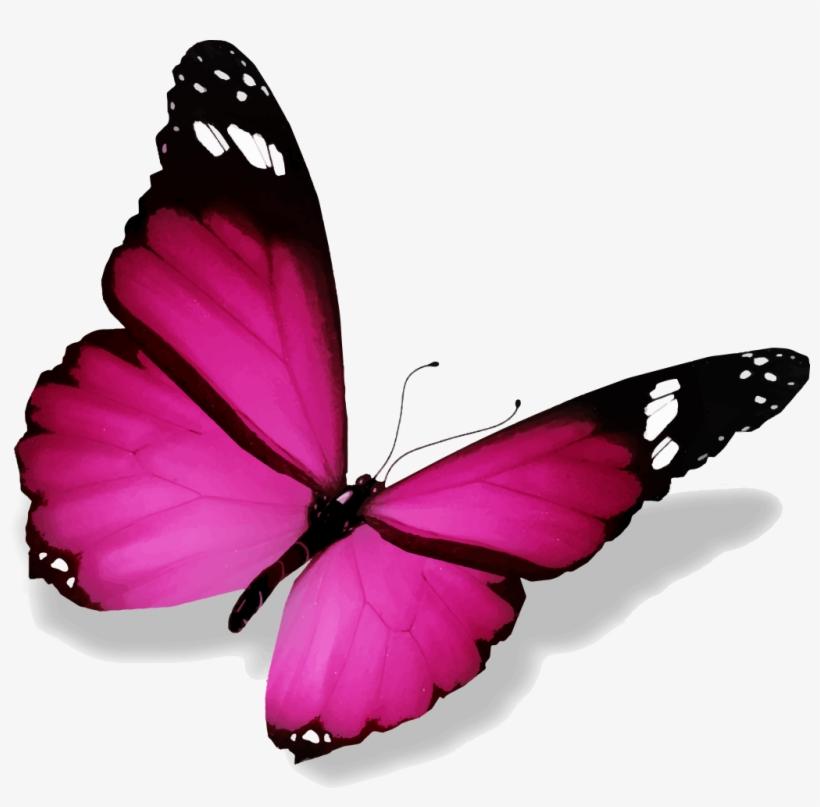 Papillon PNG & Download Transparent Papillon PNG Images for.