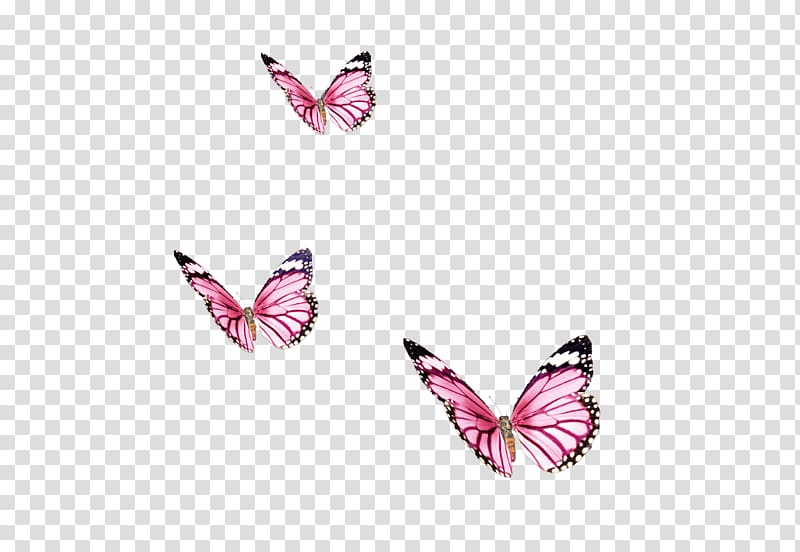 Butterfly Color Insect, Papillon transparent background PNG.