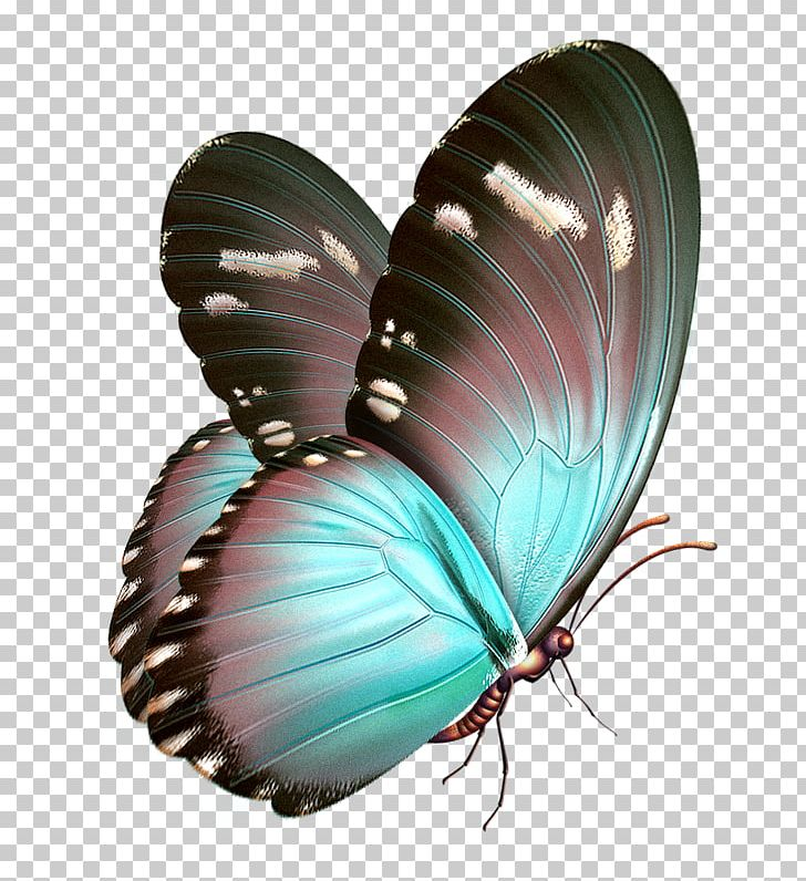 Butterfly Papillon Dog PNG, Clipart, Art, Arthropod.