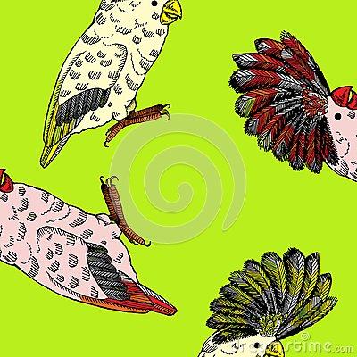 Pappus Stock Illustrations.