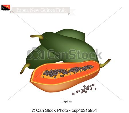 Clipart Vector of Ripe Papaya, A Famous Fruit in Papua New Guinea.