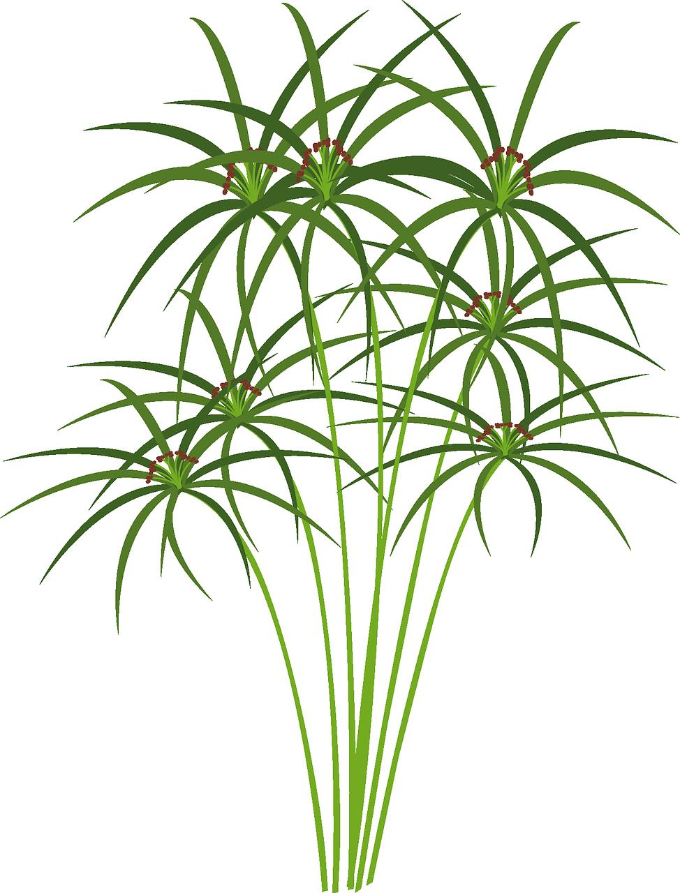 HD Papyrus Plant Hemp Png Image.