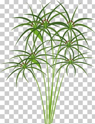 Papyrus 3 PNG Images, Papyrus 3 Clipart Free Download.