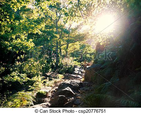 Stock Images of small path along the river Rio de la Miel in the.