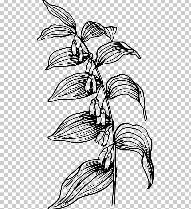 Branch Flower Plant Stem Line Art PNG, Clipart, Artwork.