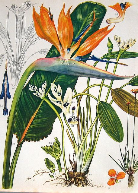 1000+ images about Botanical Works of Art on Pinterest.