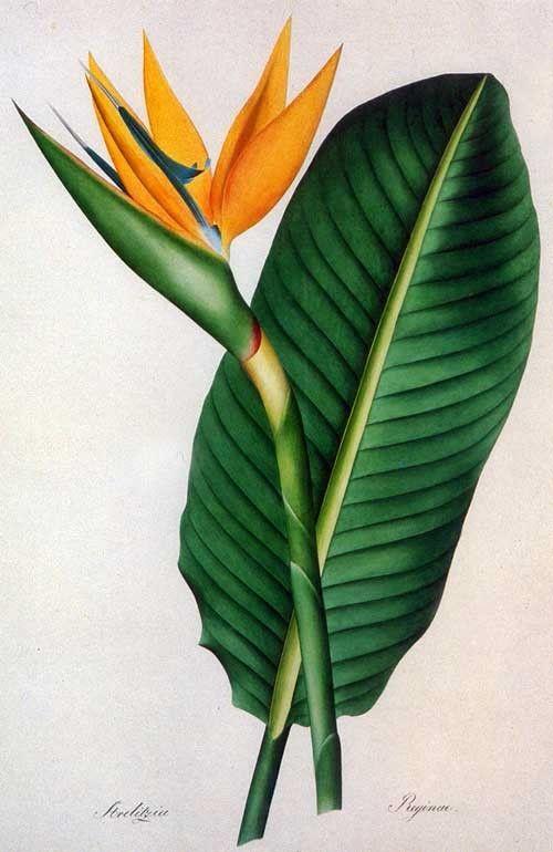1000+ images about Botanical on Pinterest.