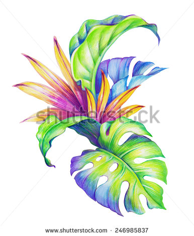 Watercolor Tropical Green Leaves Isolated On Stock Illustration.