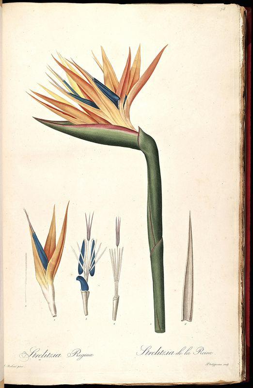 1000+ images about Botanical art ☘ on Pinterest.