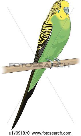 Clipart of Parakeet u17091870.