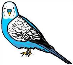 Free Parakeet Clipart.