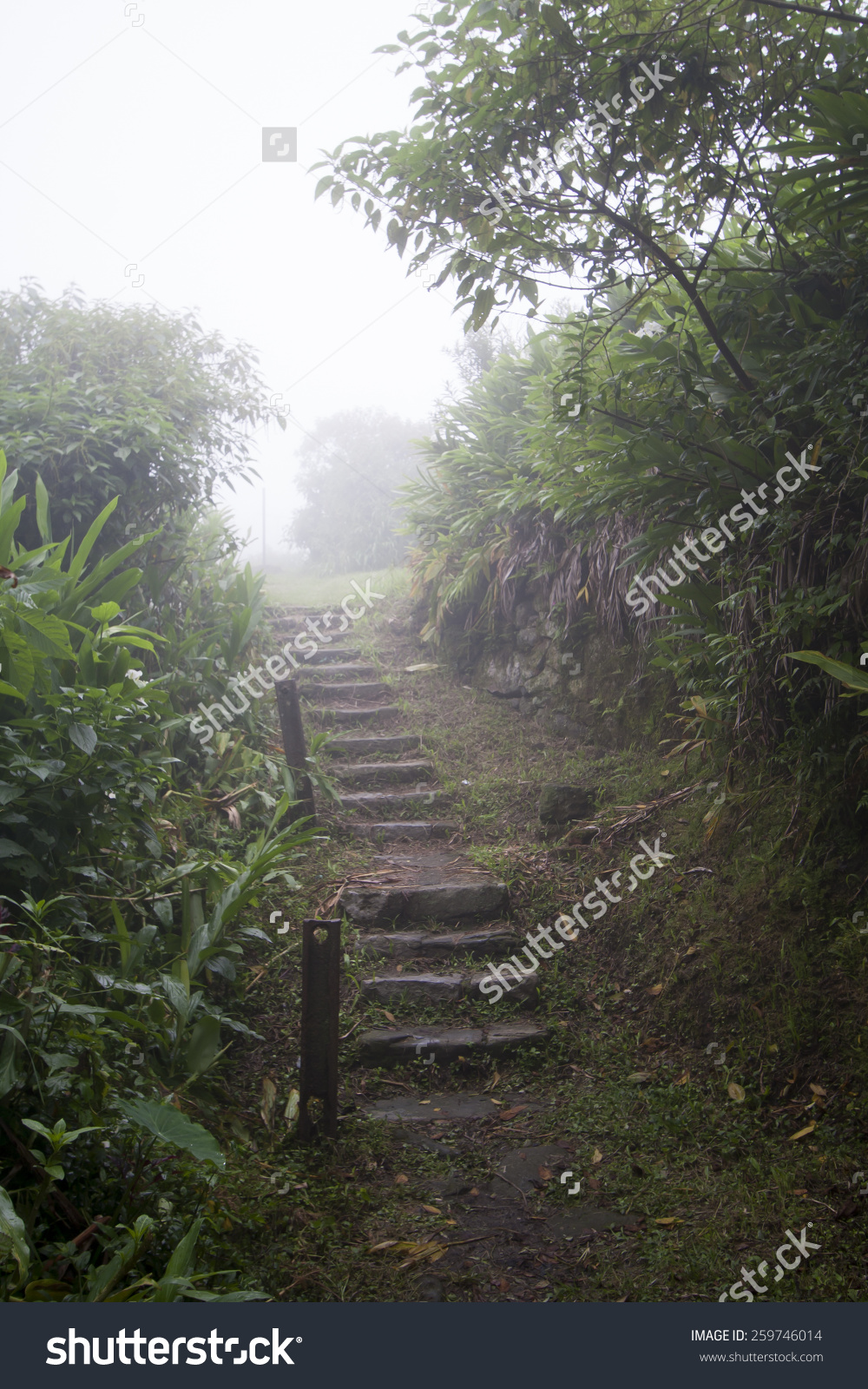 Stairs In The Middle Of A Forest In Paranapiacaba, Brazil Stock.