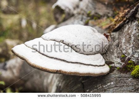 Fungi As Parasites Stock Photos, Royalty.