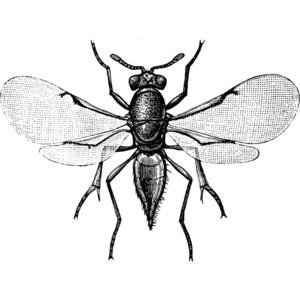 Parasitic Wasp Clipart.