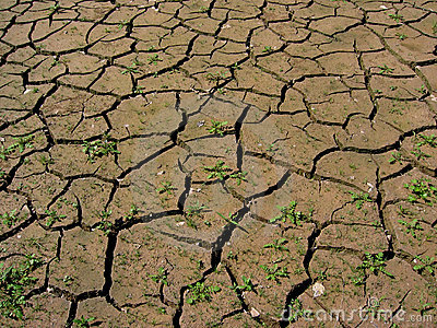 Parched Earth Stock Photos.