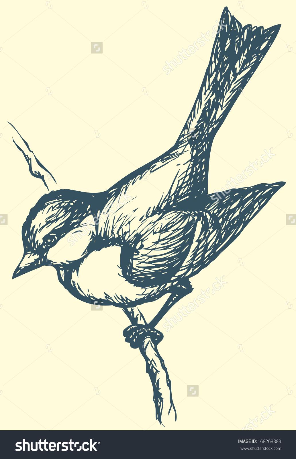 Vector Drawing Series Monochrome Sketches Birds Stock Vector.