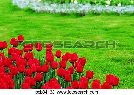 Stock Photo of park, flower, flower garden, day, living thing.