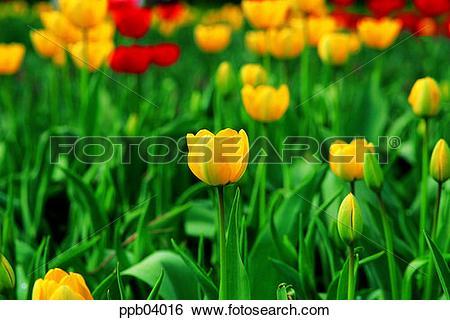 Stock Images of park, flower, flower garden, day, living thing.