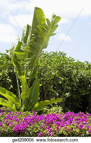 Stock Image of Flowers and plants in a park, Cancun, Mexico.