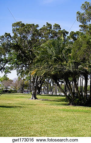 Stock Images of Trees in a park, Plant park, University of Tampa.