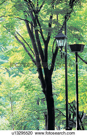 Stock Photography of scenery, foreign, plant, tree, streetlight.