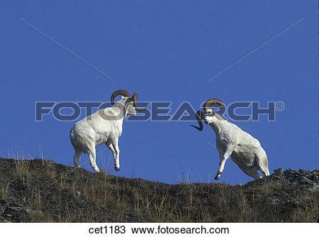 Stock Photo of USA, Alaska, Denali National Park, Mt. Wright, Park.