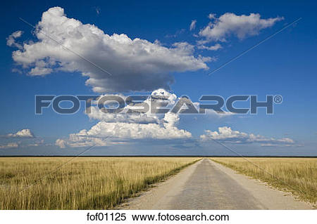 Stock Image of Africa, Namibia, Etosha National Park, Road.