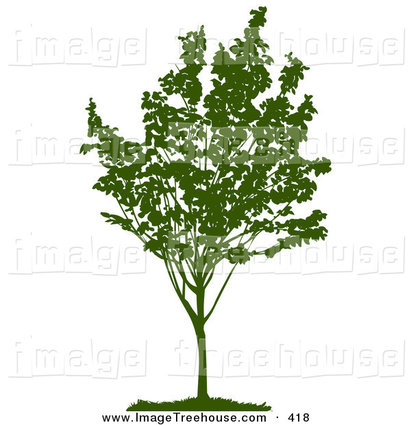 Clipart of a Young Green Silhouetted Tree with Foliage in a Park.