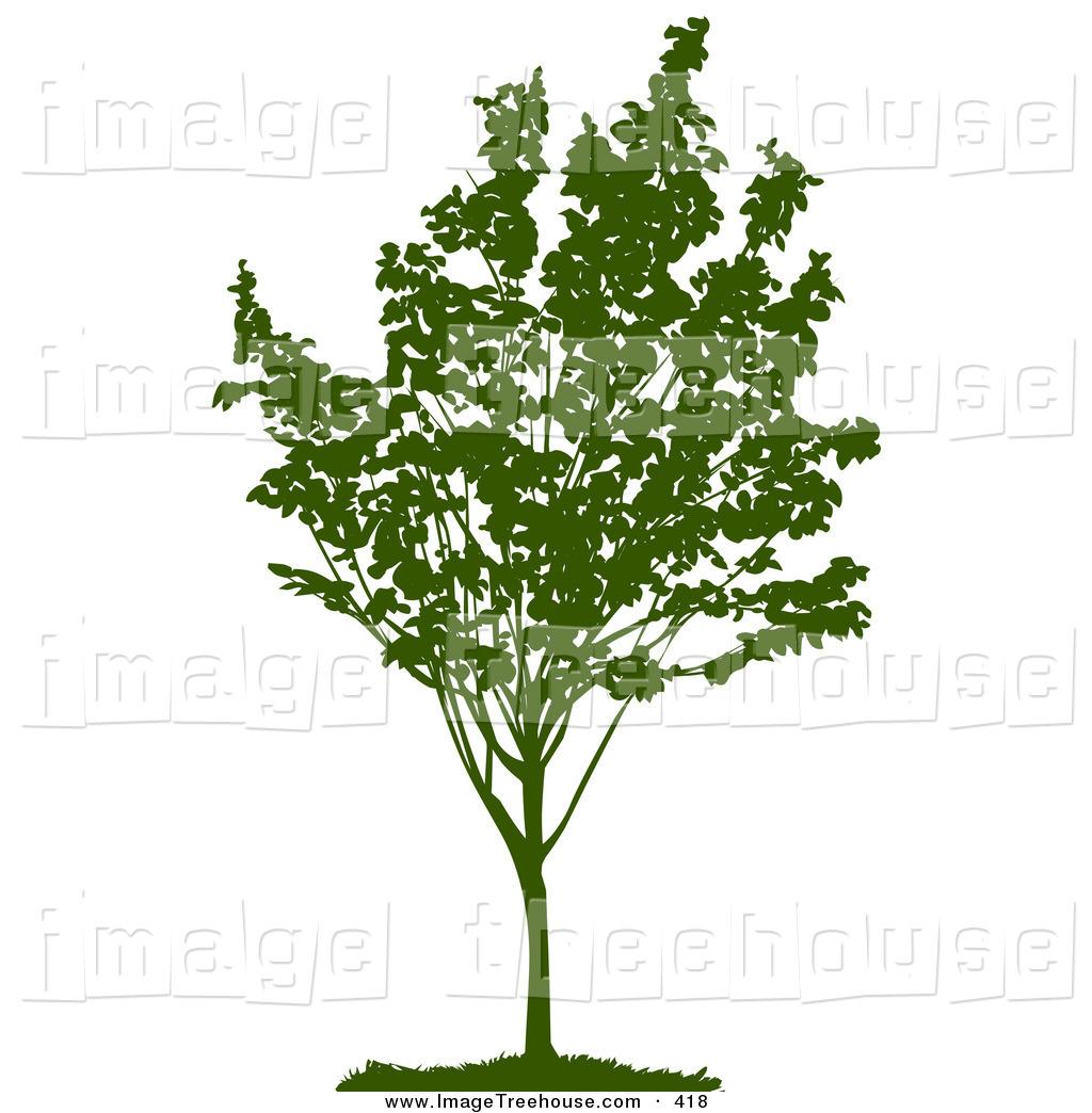 Park Tree Clipart.